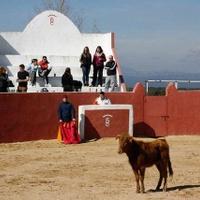 Capeas en Conil de la Frontera y El Palmar