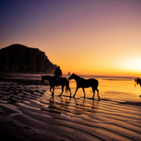 Paseos a Caballo en Tarifa