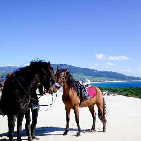 Paseos a Caballo en Tarifa - caballos3.jpg