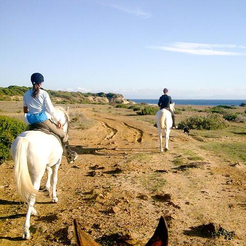 Paseos a Caballo en Tarifa - caballos2.jpg