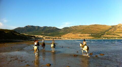 Paseos a Caballo en Tarifa - caballos1.jpg