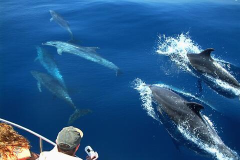 Travesías en Barco desde Algeciras hasta Conil - cetaceos.jpg