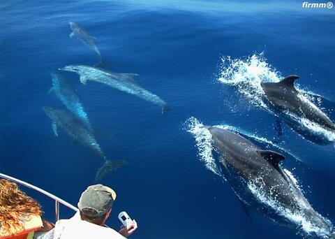 Avistamiento de Cetaceos en Tarifa - cetaceos.jpg