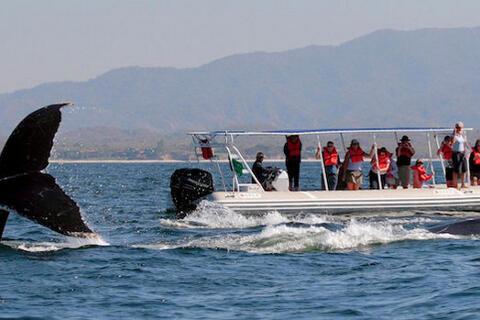 Avistamiento de Cetaceos en Tarifa - cetaceos2.jpg