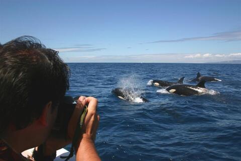 Travesías en Barco desde Algeciras hasta Conil - cetaceos1.jpg