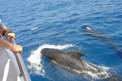 Avistamiento de Cetaceos en Tarifa - cetaceos3.jpg